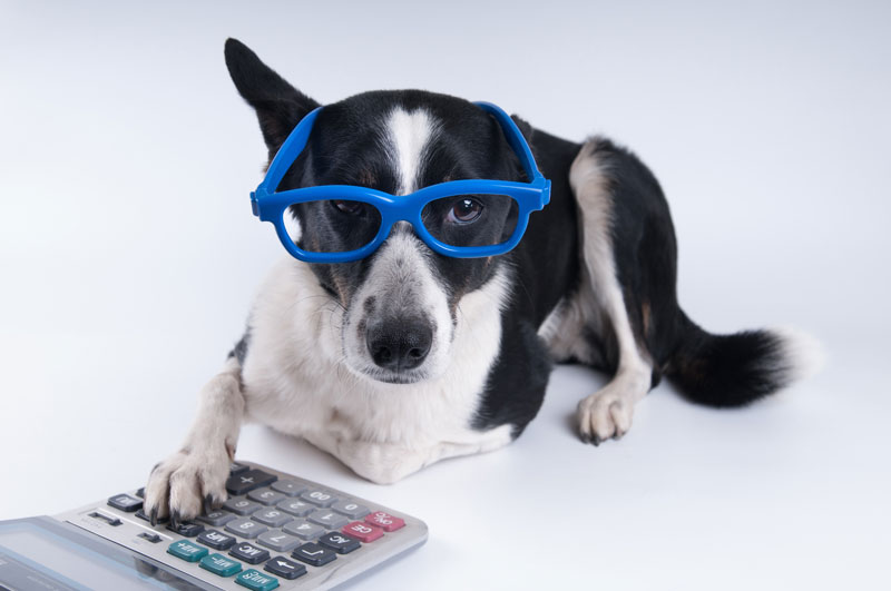 Reginald Kim Boldon's Under-Utilized Pet Tax Deductions